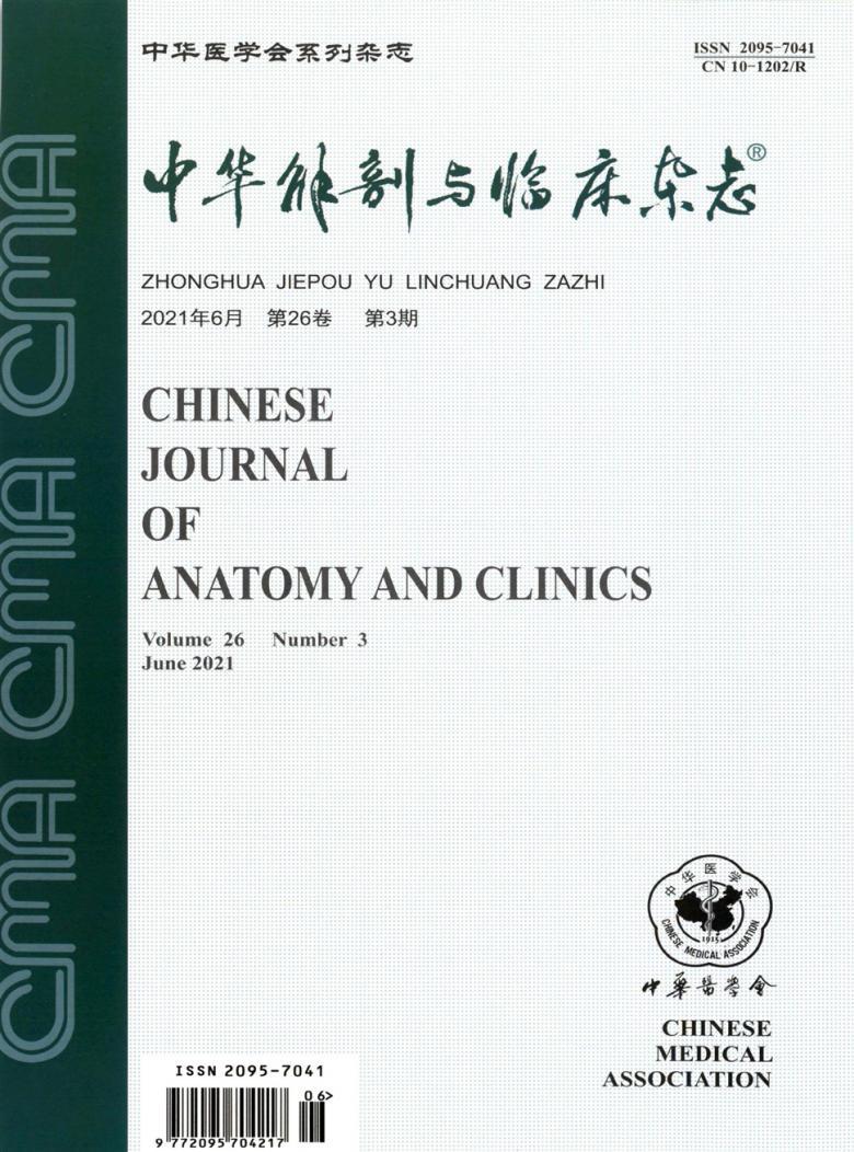 中华解剖与临床